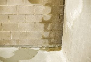 Mould in Crawl Space